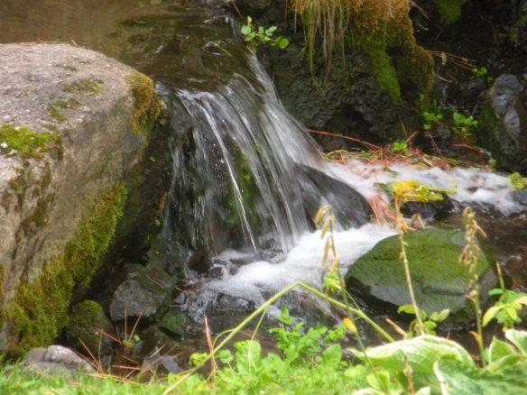 arboretum creek