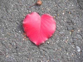 2010 October 339 Red Heart