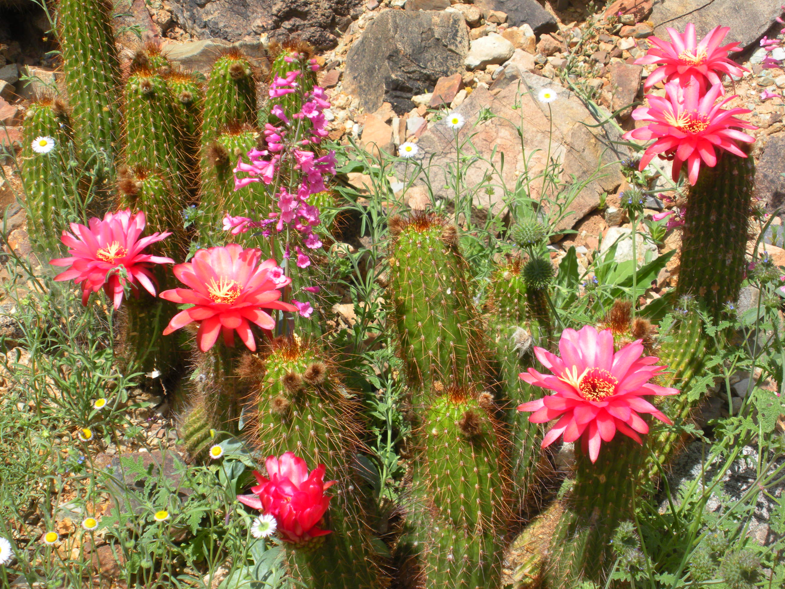 should the arizona desert bloom Arizona low desert flower garden, the: a seasonal guide to bloom, height, color, and texture [kirti mathura, jennie rambo] on amazoncom free shipping on qualifying offers.