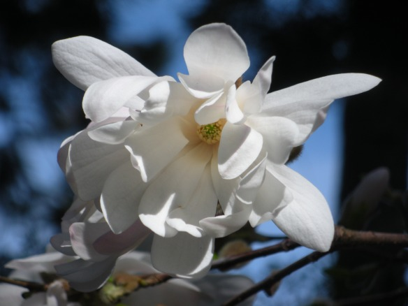 2012 April, Manito Park 046 for web sharing
