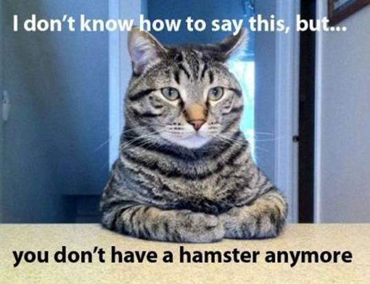 CAT confession