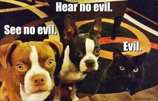 CAT see no, hear no, EVIL (Sabrina)