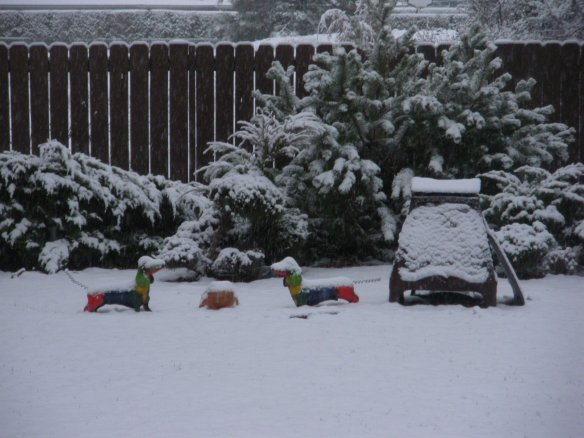backyard with harlequin pups