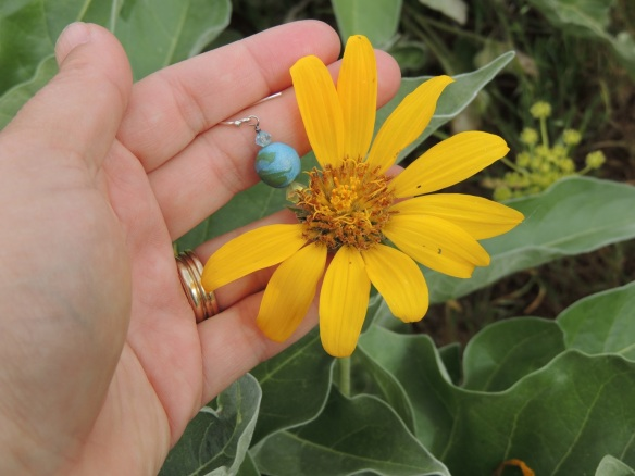rock sunflower / Arrowleaf Balsamroot