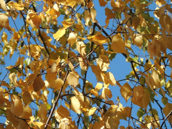 Autumn leaves with shadow and sky