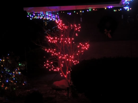 My beloved red tree (a Japanese Maple that turns red each October)