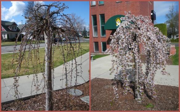 Bloomin' Tree