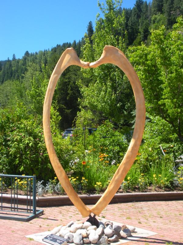 """Rebirth"" (cast of a whale pelvis -- looks like a heart)"