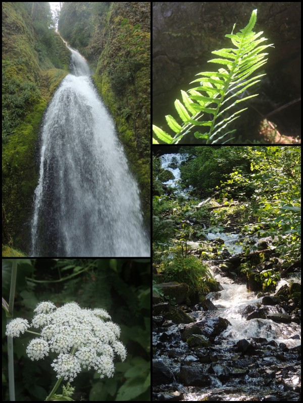 Columbia Gorge, Wahkeena Falls near Multnomah Falls