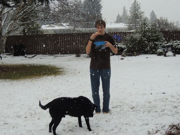 Snow falling on Black Lab