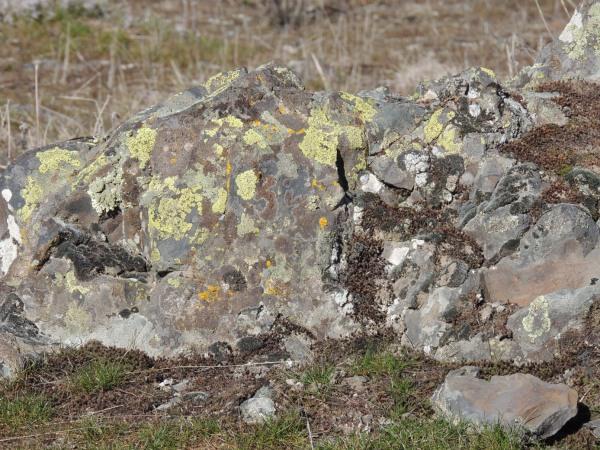 These lichen like the sun.