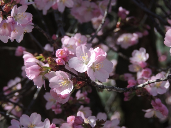 DSCN5537  more pink