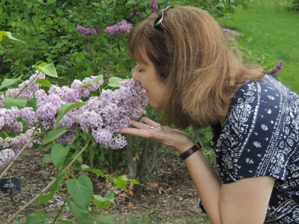 KCINNOTX enjoying the lilacs