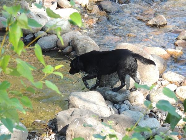 DSCN6353 River Dog, web-sharing