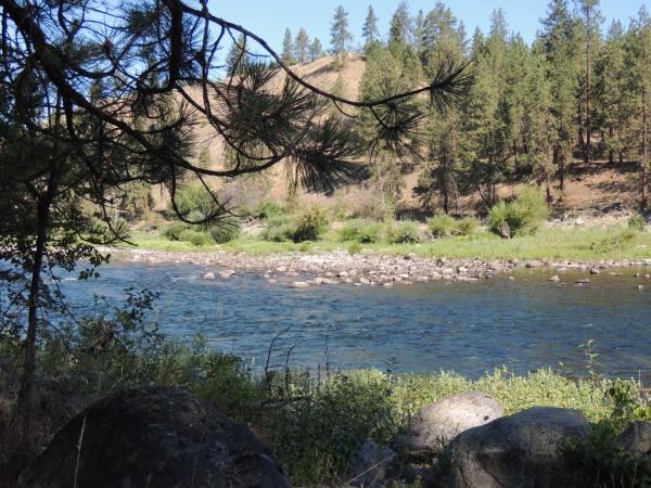 Morning river scene