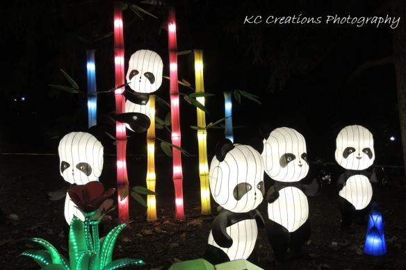 Panda Bamboo 4x6 web-sized
