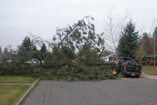 downed trees, damaged cars