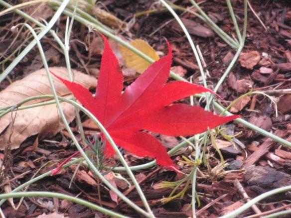 Red Star Fallen