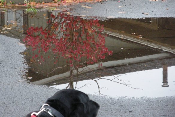 puddle of denial (Christmas is coming)