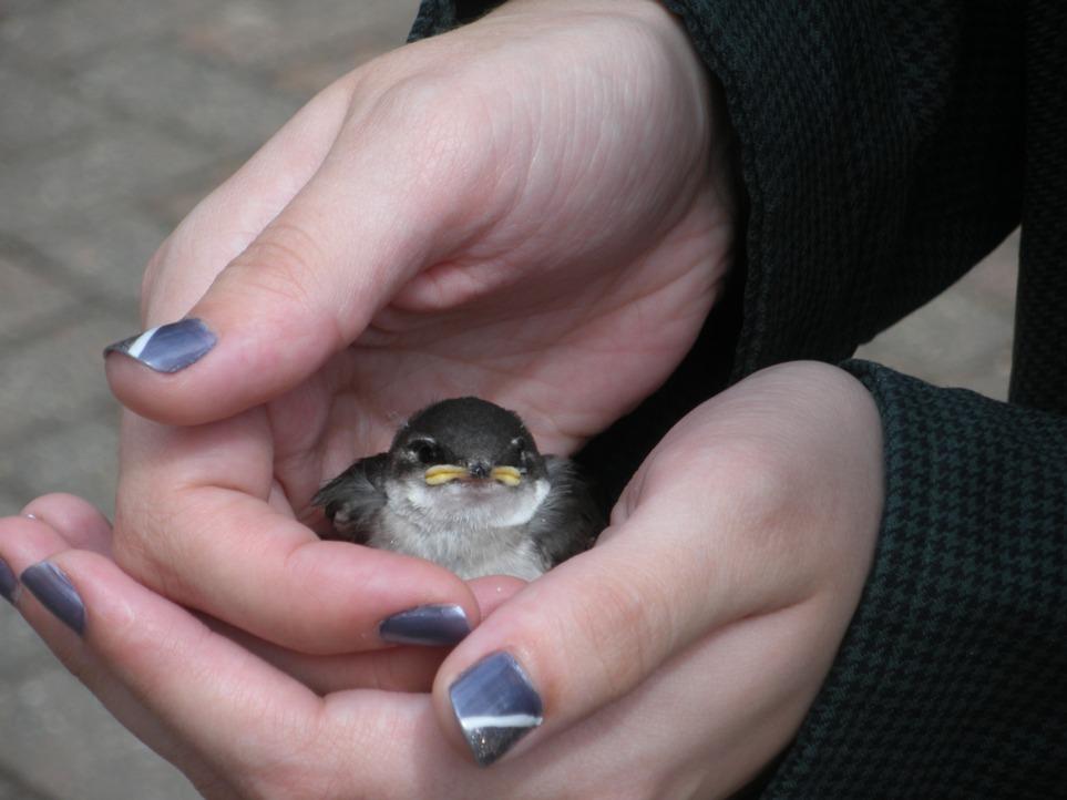 DSCN1892  bird held, websized