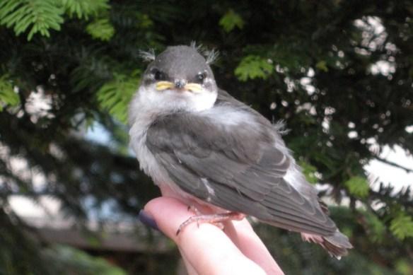 DSCN1902  bird 4s6
