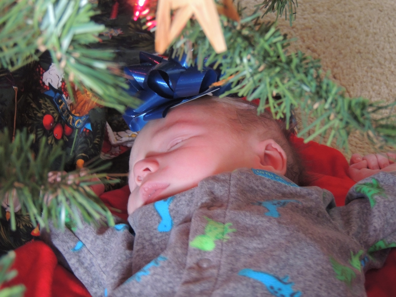 DSCN7206  best gift of Christmas, websized