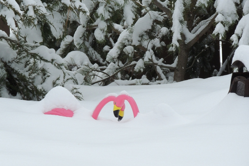 dscn1558-up-to-their-beaks-in-snow-4x6