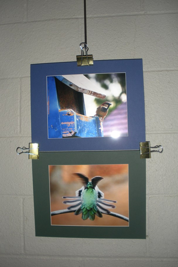 DSCN3046 Websizedm bird house, hummingbird wings