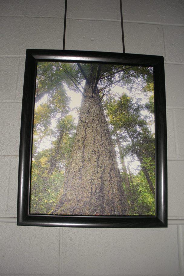 DSCN3048 Websized, Multnomah Tree