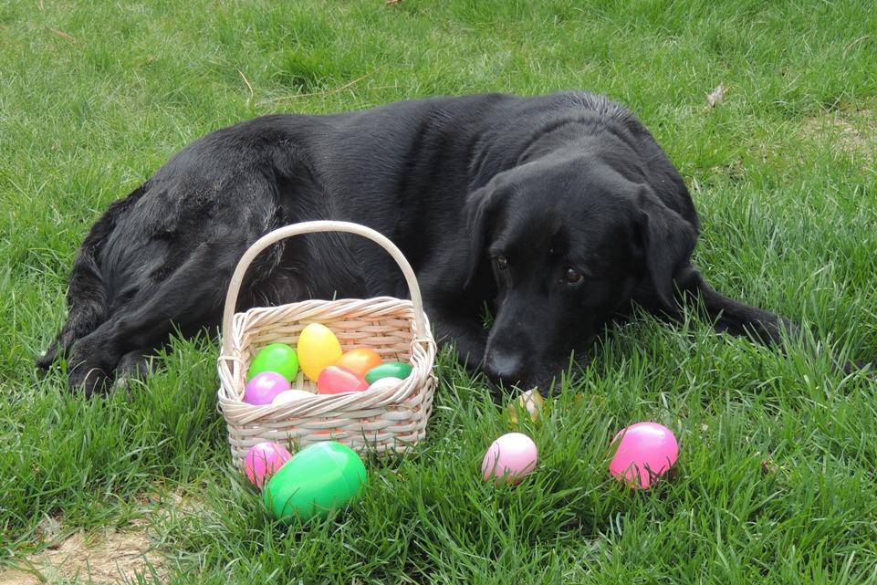 DSCN2152 Happy Easter old pup