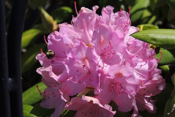 DSCN4729 4x6 Rhodie, no filters WEBSIZED