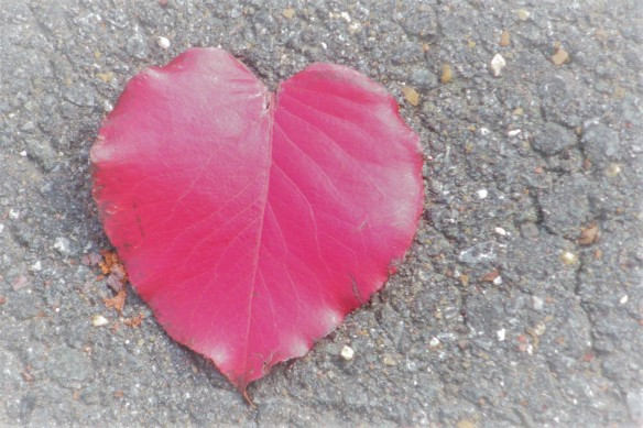 red leaf HEART 4x6 October 2010